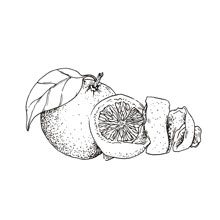 Muma Gin Botaniche: Citrus